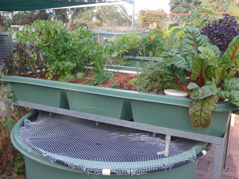 Aquaponics Siphon System Trial Results