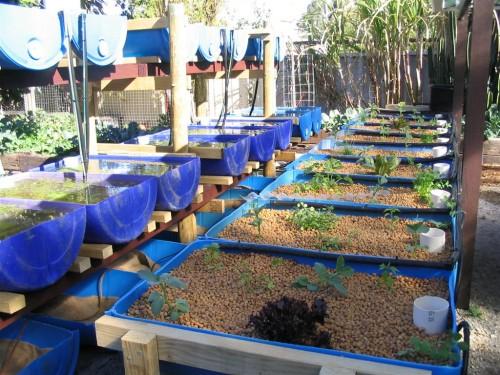 Gentil Systems   Backyard Aquaponics