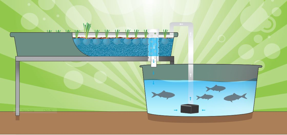 Running the system backyard aquaponics for Simple drainage system