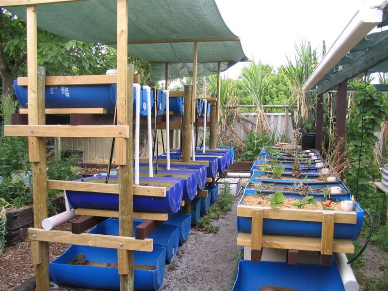 Barrel Aquaponic Systems - Backyard Aquaponics