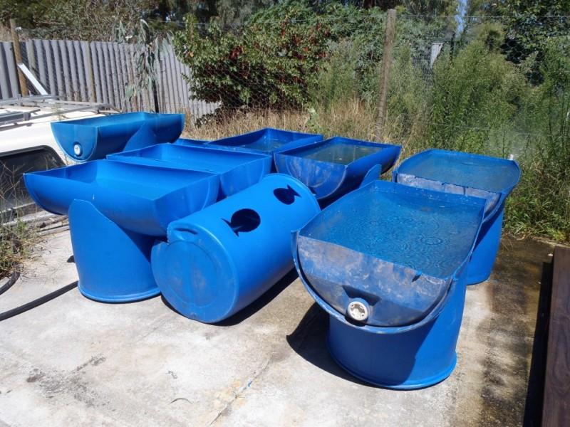 Barrel Aquaponic Systems Backyard Aquaponics