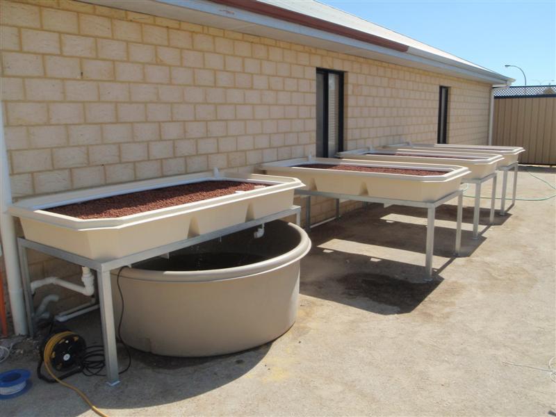 Aquaponics plumbing setup guide waters sistem for Aquaponics fish food